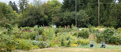 Fulton Community Garden_1801