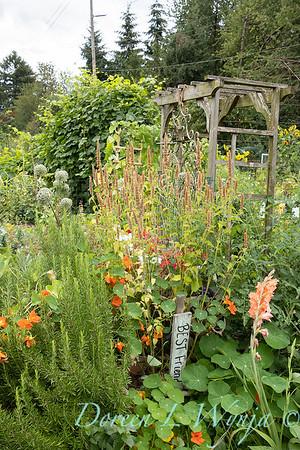 Fulton Community Garden_1805