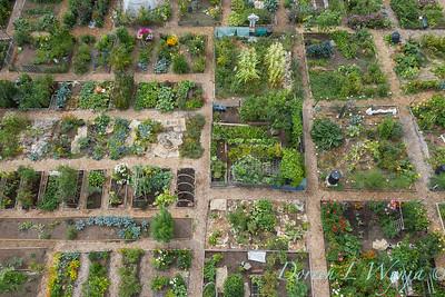Aerial view Fulton Community Garden_1847