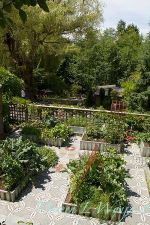 Millie's Garden_902