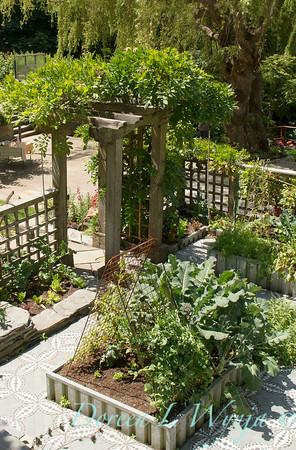 Millie's Garden_903