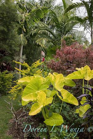 Welsch - Davenport Hawaii_1004