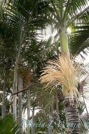 Welsch - Davenport Hawaii_1013