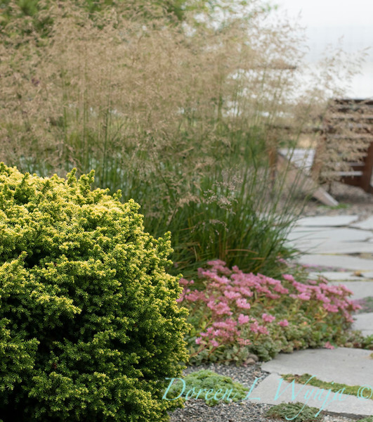 Janine & Terry's garden_1204