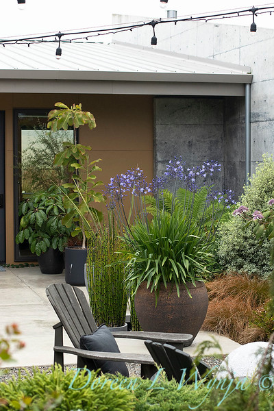 Janine & Terry's garden_1205