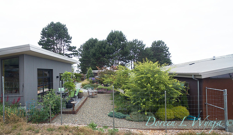 Janine & Terry's garden_1232