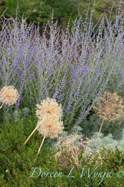 Janine & Terry's garden_1216