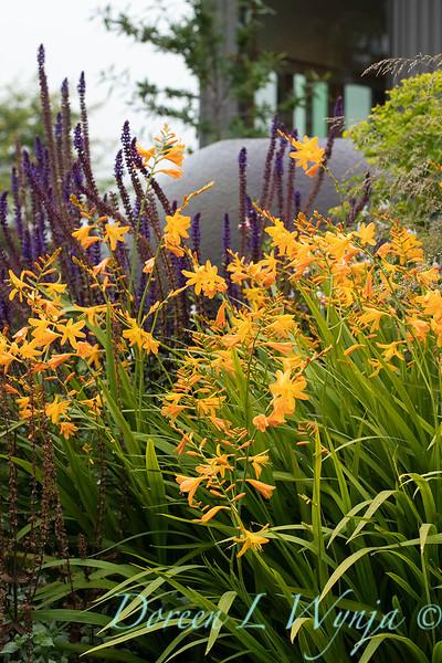 Janine & Terry's garden_1198