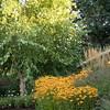 Betula nigra 'Cully' - Rudbeckia fulgida var  sullivantii 'Goldsturm' - Pennisetum alopecuroides 'Hameln' - Calamagrostis x acutiflora 'Karl Foerster' - hardscaping_0570