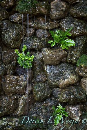 Leslie Campbell landscape designer_1026
