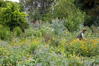 Leslie - herb bundles_2010
