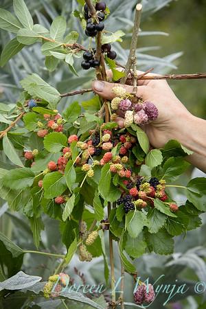 Leslie - bundle of berries_2026
