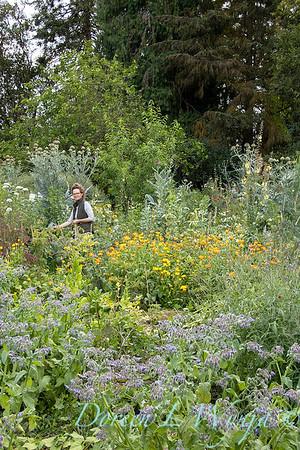 Leslie - herb bundles_2006