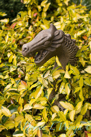 Trachelospermum asiaticum 'Torafu' - dragon art_1346
