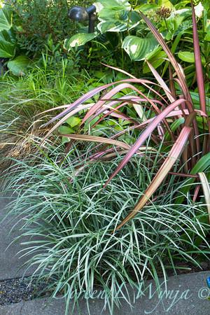 Liriope spicata Silver Dragon - Phormium walkway_0271