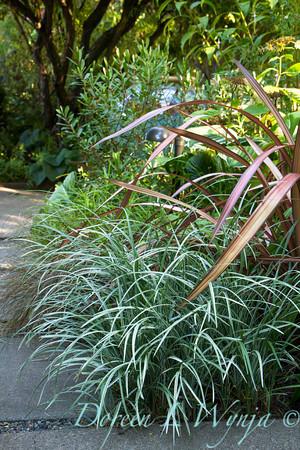 Liriope spicata Silver Dragon - Phormium - walkway_1382