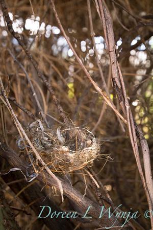 Nest_5255