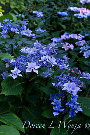 Darcy Garden_013