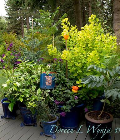 Darcy Garden_062