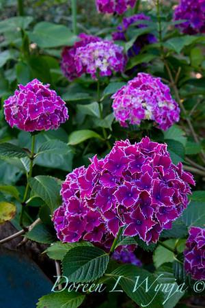 Darcy Garden_021