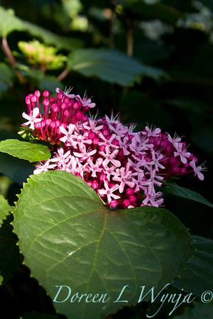 Darcy Garden_028