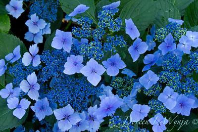 Darcy Garden_020