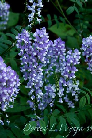 Darcy Garden_049