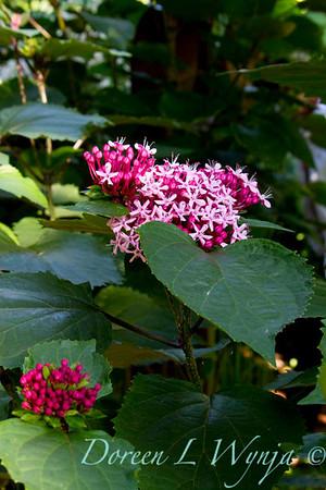 Darcy Garden_031