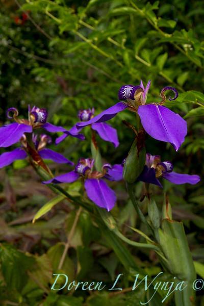 Darcy Garden_071