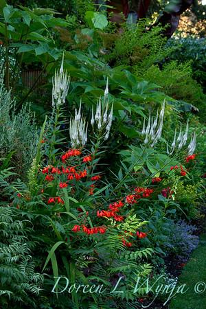 Darcy Garden_051