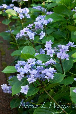 Darcy Garden_019