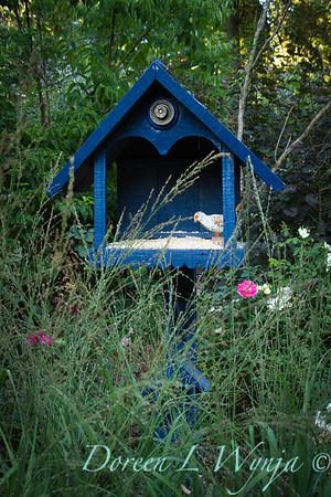 Darcy Garden_045