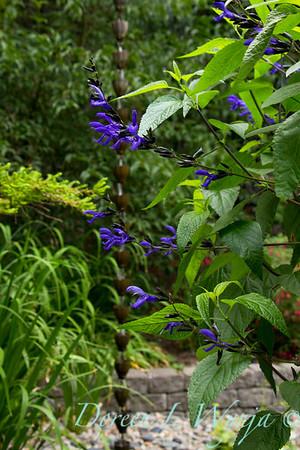 Darcy Garden_056