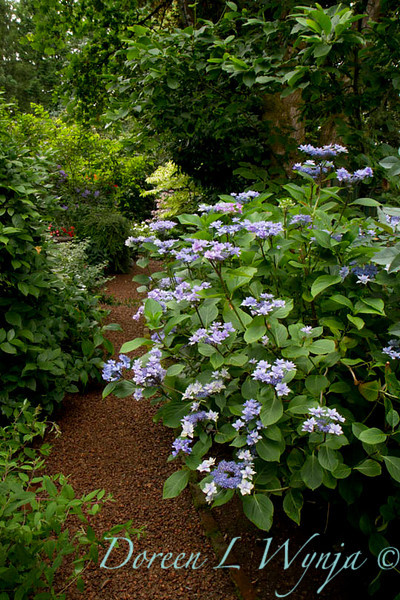 Darcy Garden_011