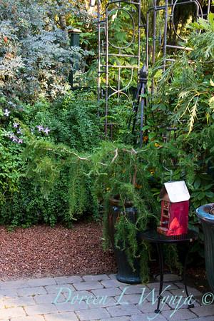 Darcy Garden_119