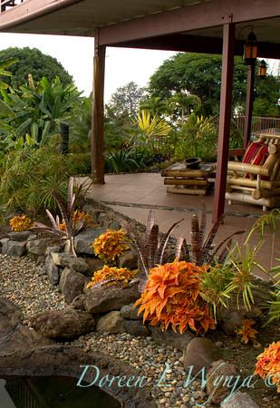 Tropical Landscape Solenostemon Rustic Orange_001