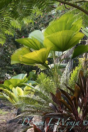 Welsch - Davenport Hawaii_1024