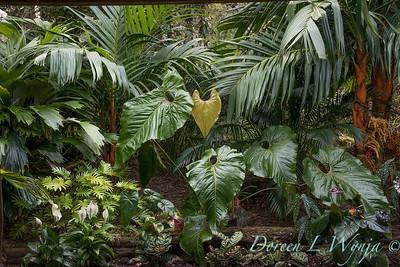 Welsch - Davenport Hawaii_1005