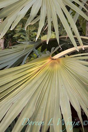 Welsch - Davenport Hawaii_1021