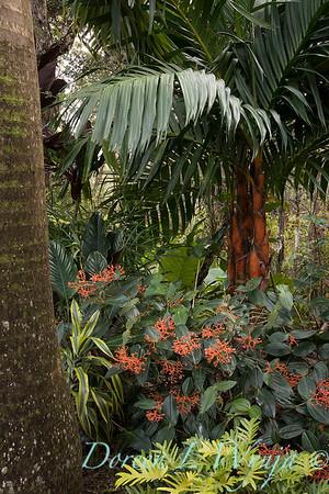 Welsch - Davenport Hawaii_1009
