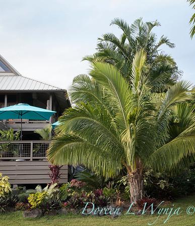 Welsch - Davenport Hawaii_1019