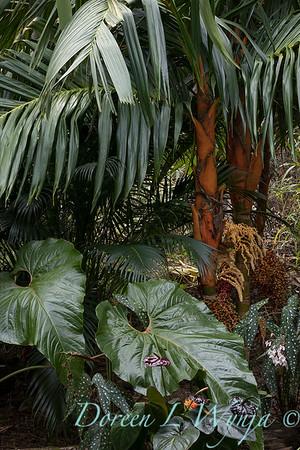 Welsch - Davenport Hawaii_1006