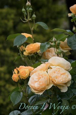 Lily Maxwell - garden designer_7505