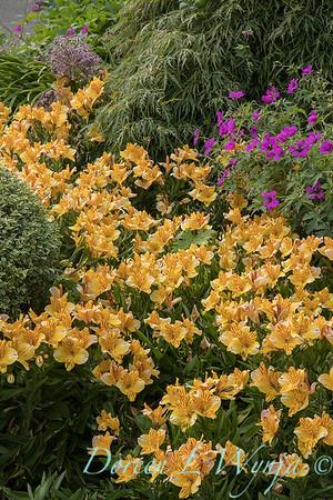 Lily Maxwell - garden designer_7502