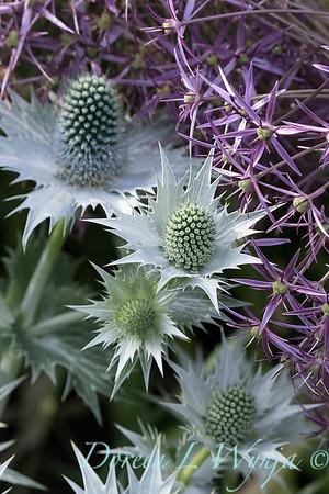 Lily Maxwell - garden designer_7545