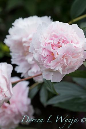 Lily Maxwell - garden designer_7511