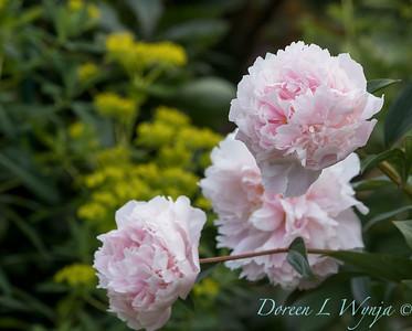 Lily Maxwell - garden designer_7512