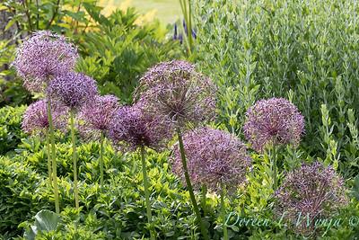 Lily Maxwell - garden designer_7542