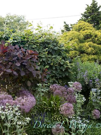 Lily Maxwell - garden designer_7541