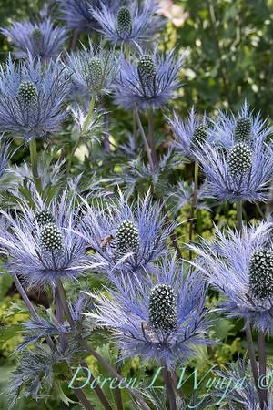 Lily Maxwell - garden designer_7509